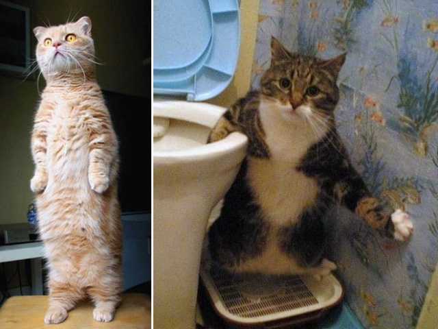 Cats Standing Up (20 pics)