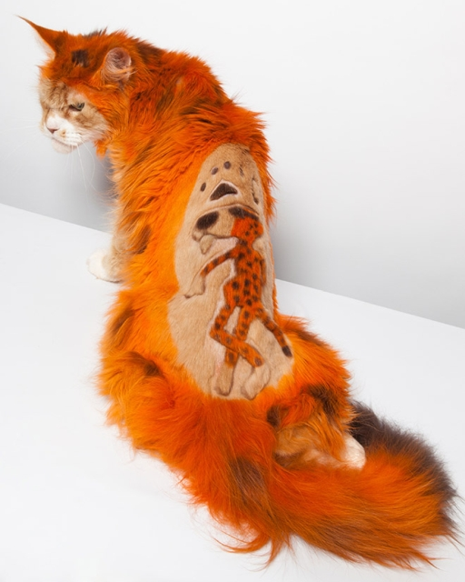 Extreme Cat Grooming (20 pics)