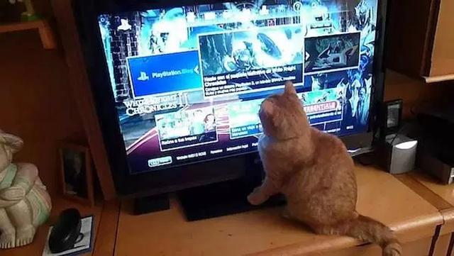 Pets And Gaming (30 pics)