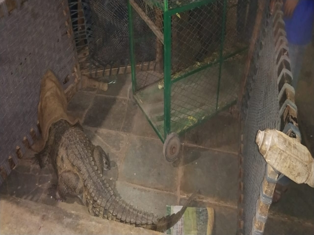 In India, Farmer Wakes Up To Find Crocodile Under His Bed (3 pics)