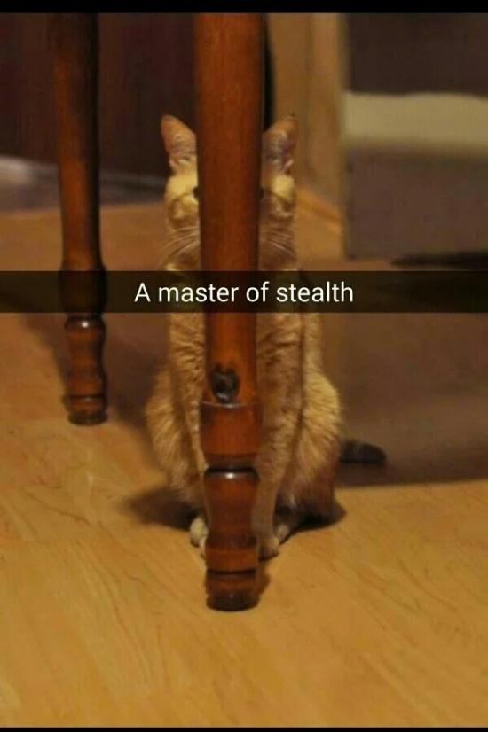 Sneaky (26 pics)