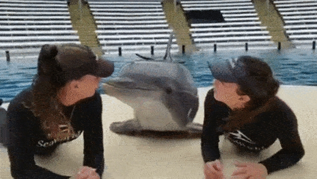 Animals Acting Like Humans (17 gifs)