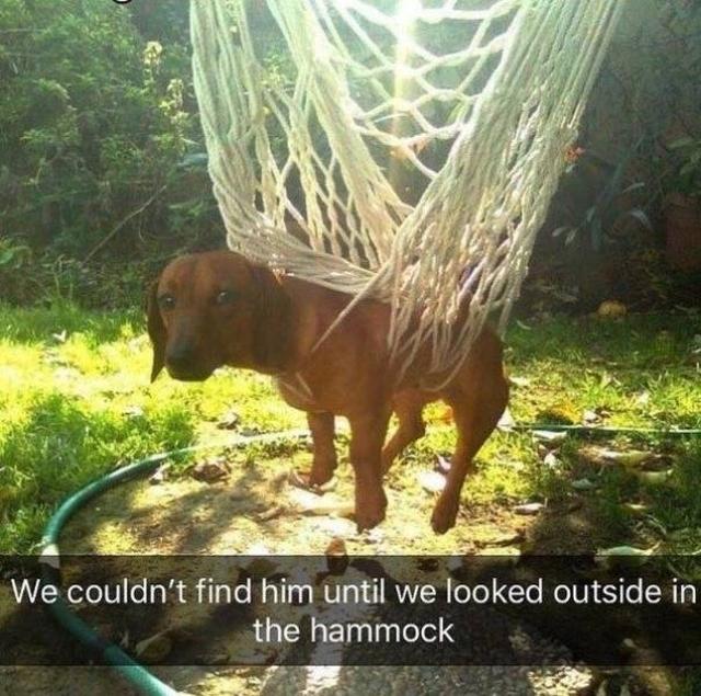 Memes About Pets (28 pics)