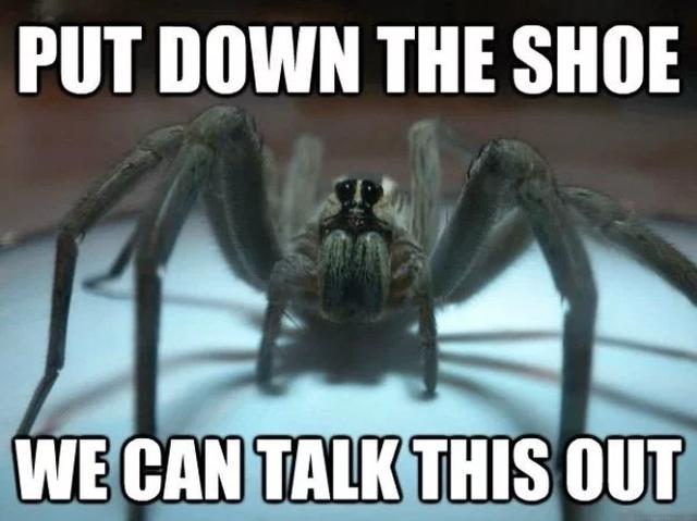 Spider Bros (29 pics)