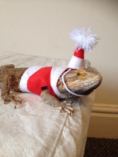 Lizard Costumes (20 pics)
