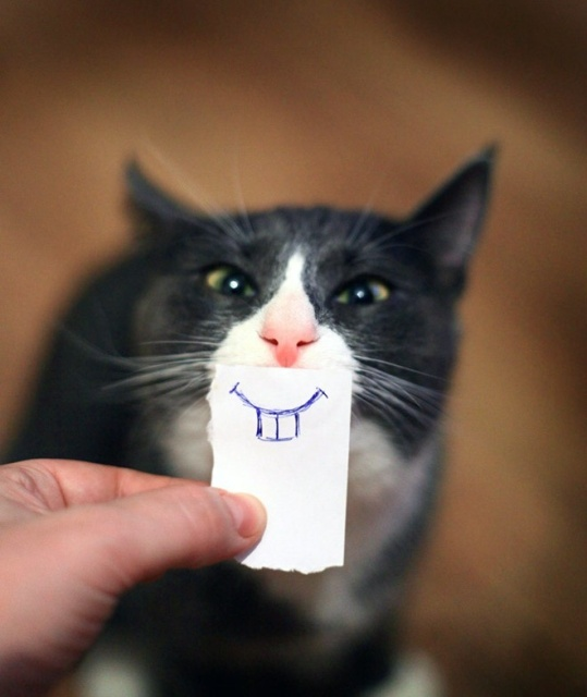 Cats With Cartoon Eyes And Mouths (20 pics)