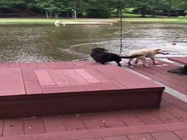 Gotta Save My Human!