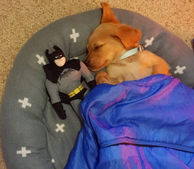 People Who Love Their Pets Too Much (15 pics)