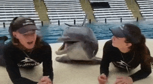 Animals Behave Like Humans (17 gifs)