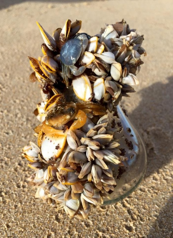 Found On The Beaches (20 pics)