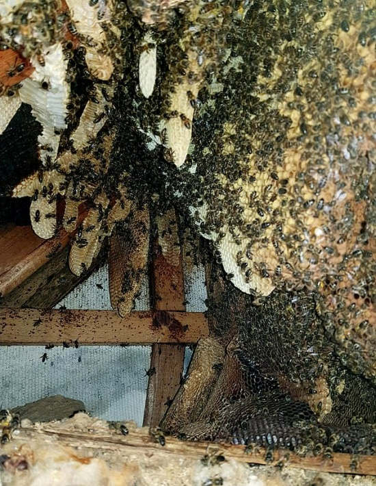 A House Full Of Bees (10 pics)