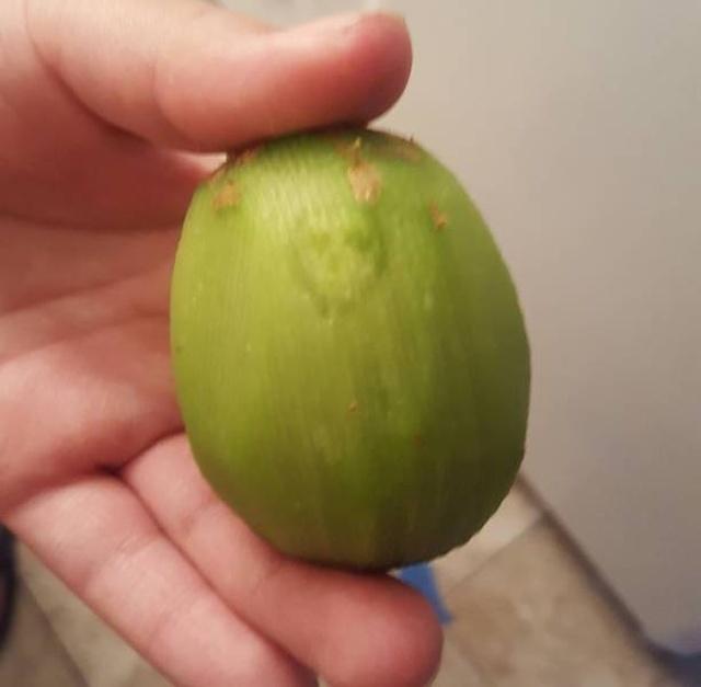 Peeled Fruits (21 pics)