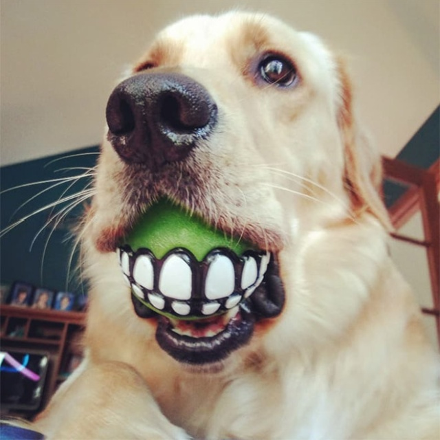 Teeth Ball Is A Very Funny Dog Toy (20 pics)
