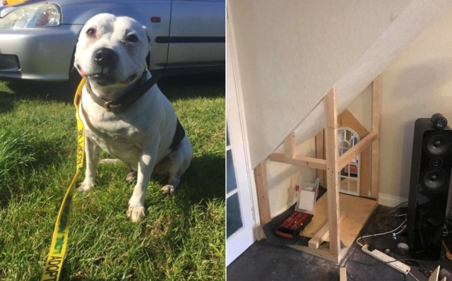 DIY Dog House (14 pics)