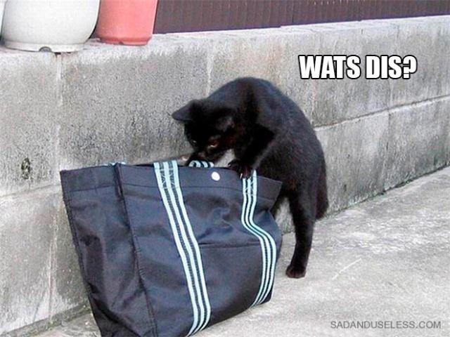 Cat Scientists (19 pics)