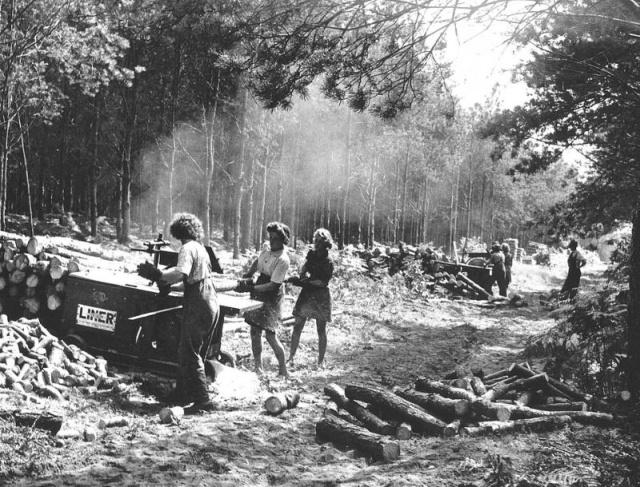 Lumberjack Women During World War II (13 pics)