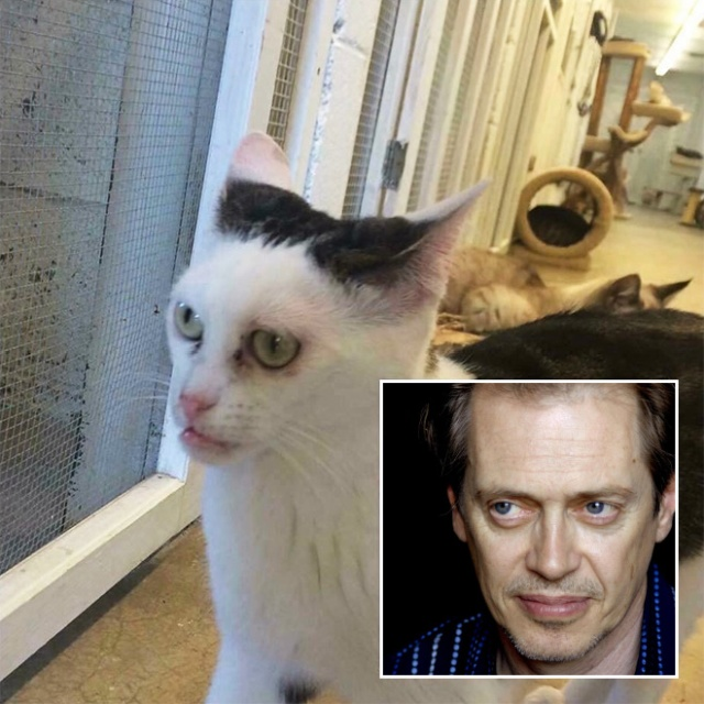 Marla The Cat Looks Like Steve Buscemi (20 pics)