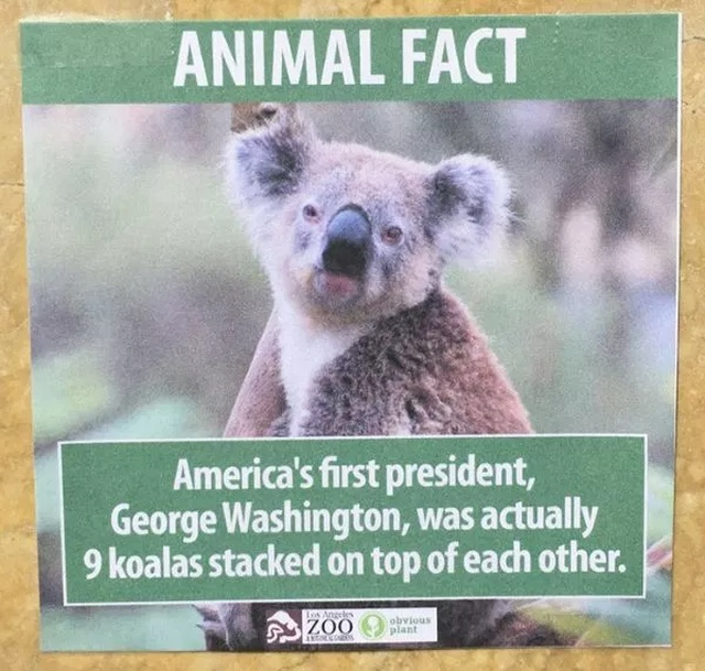 Quick Animal Facts. And They Are 100% True (23 pics)