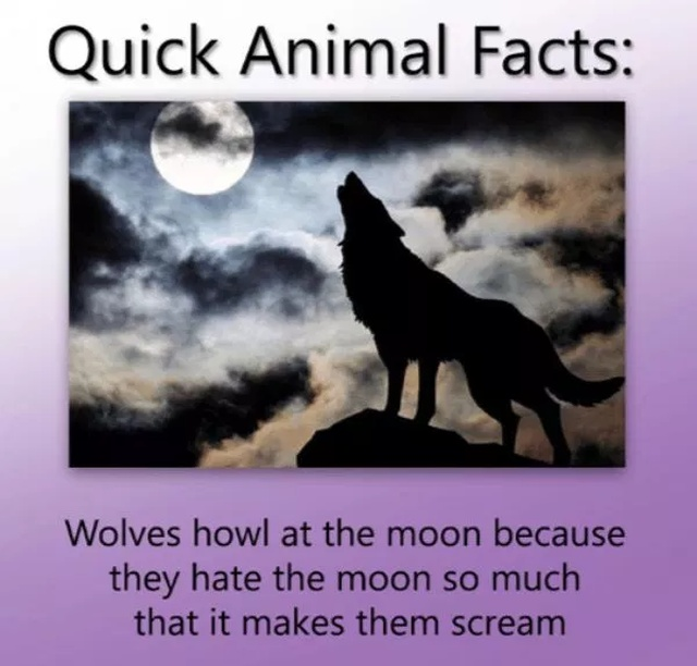 Chunks of facts - Page 23 Animal_facts_11