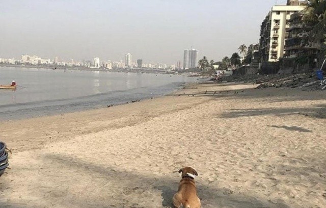 The Mahim Beach Cleanup In Mumbai Cleared About 700 Tons Of Plastic (2 pics)