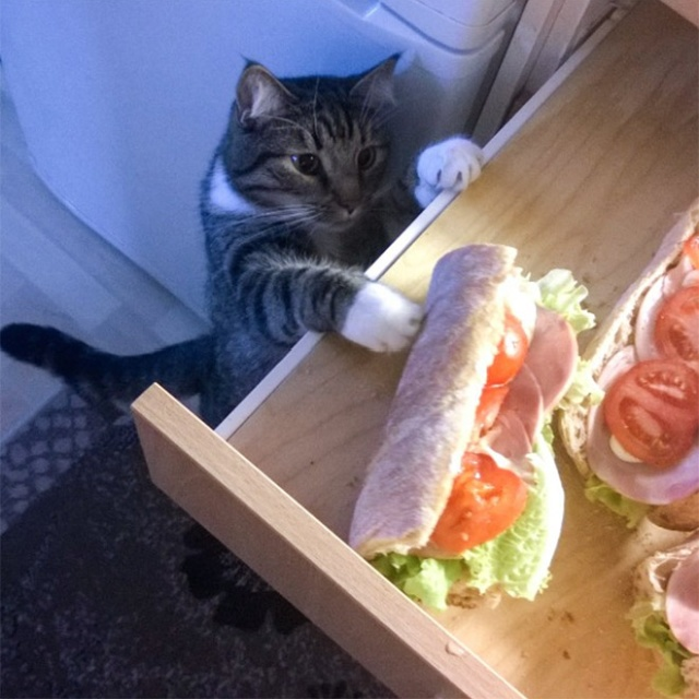 Cats Stealing Things. Mostly Food (20 pics)