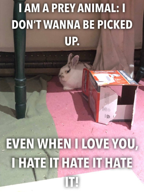 If You Want To Get A Bunny Before Easter – Don't Do It (14 pics)