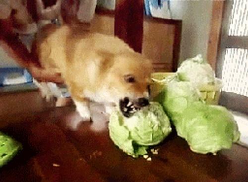 Eating Animals (20 gifs)