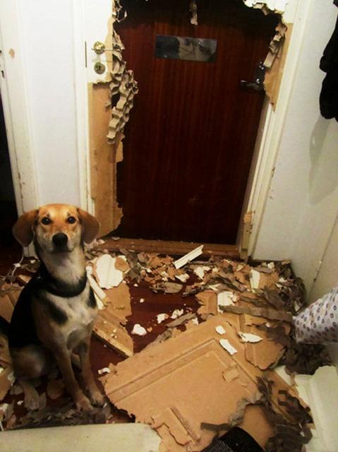 Animals Home Alone (17 pics)