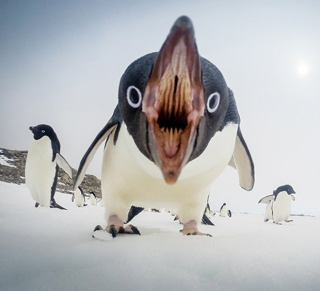 Bird Mouths Look Scary (20 pics)