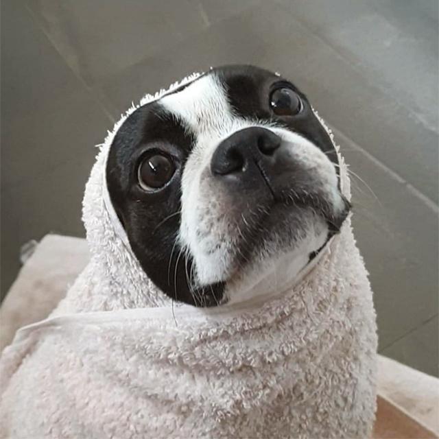 Dog Burritos (20 pics)