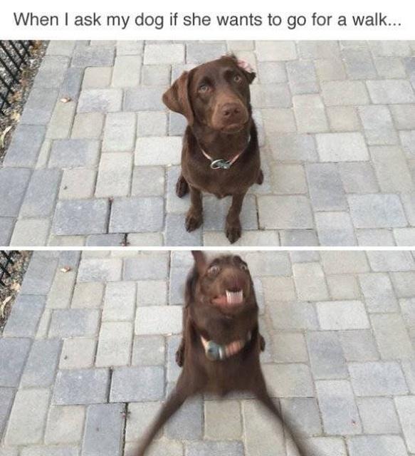 Funny Dog Memes (34 pics)