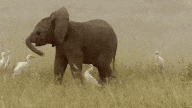 Baby Elephants (17 gifs)