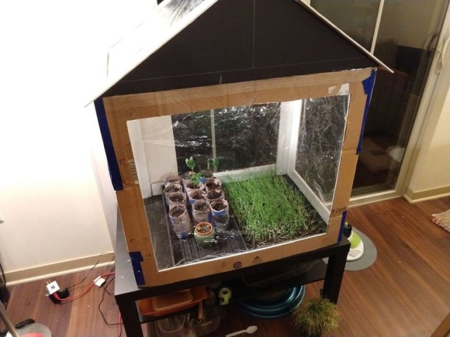 DIY Greenhouse From Cardboard Boxes (15 pics)
