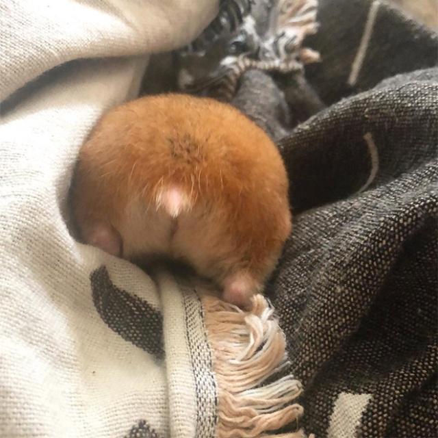 Hamster Butts (21 pics)