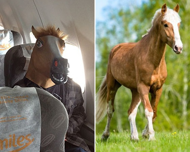 How Horses Fly (7 pics)