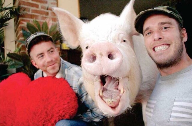 In 2012, Two Guys Got A Mini-Pig... (18 pics)