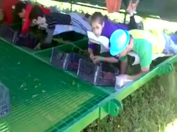 Strawberry Picking Machine
