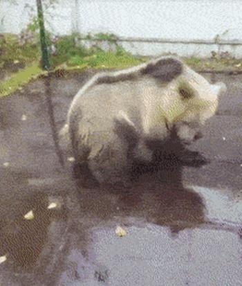 When Animals Get Zoomies (13 gifs)