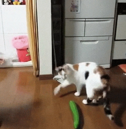 Cats Freaking Out (17 gifs)