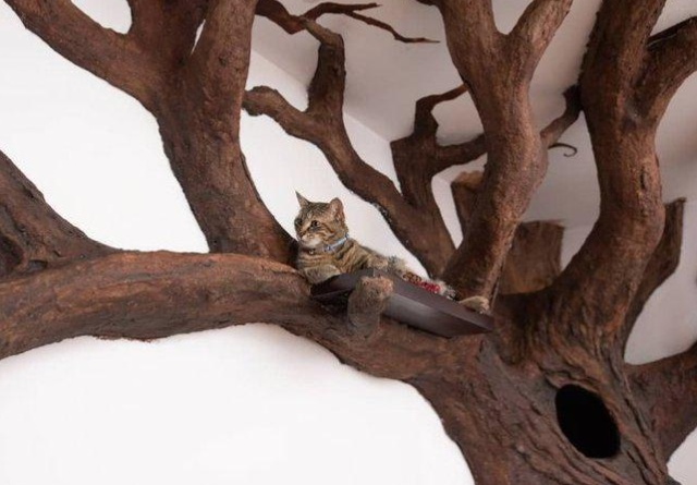 A Tree House For A Cat (5 pics)