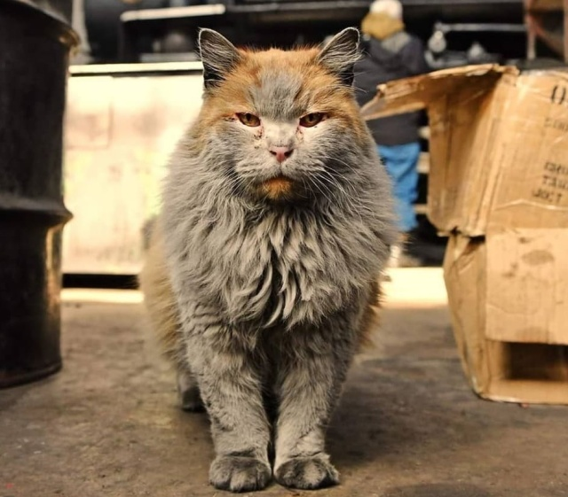 This Cat Has An Unbelievable Natural Color (10 pics)