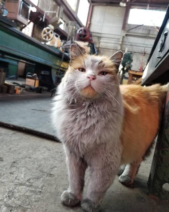 This Cat Has An Unbelievable Natural Color (10 pics)