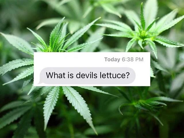 Embarrassing Mom Texts (22 pics)