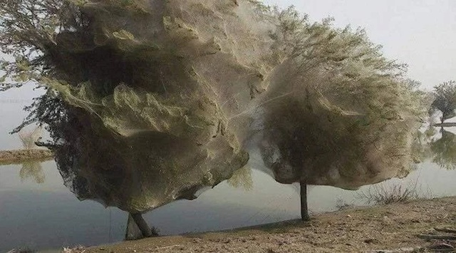 Nature Can Be Scary (16 pics)
