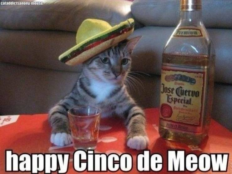 Cinco De Mayo Memes And Taco Dreams (22 pics)