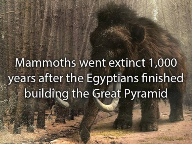 Amazing Facts (22 pics)