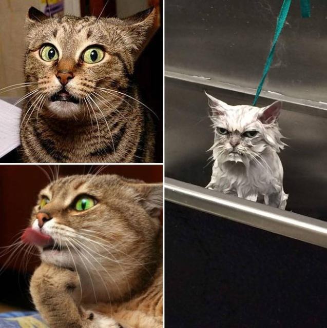 Funny Cats (21 pics)