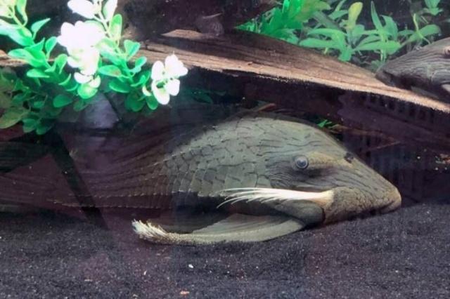 When Aquarium Fish Reaches 25 Years Of Age (6 pics)