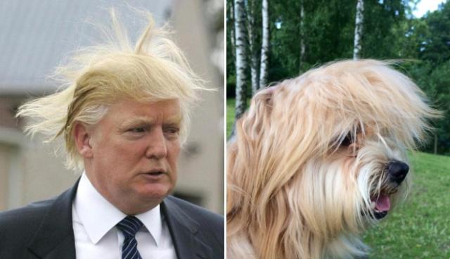 Things That Look Like Trump (24 pics)