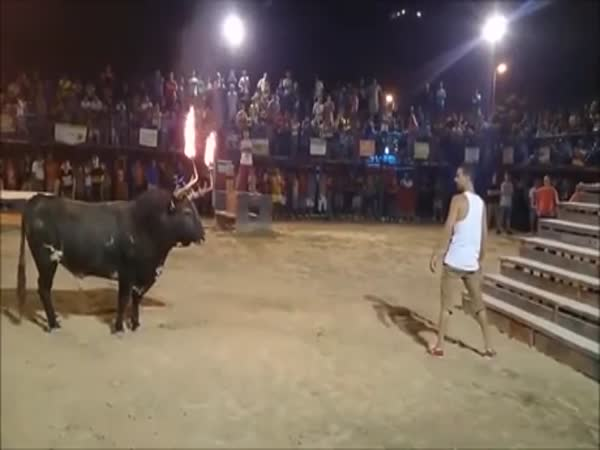 Challenging The Bull, What Could Go Wrong?